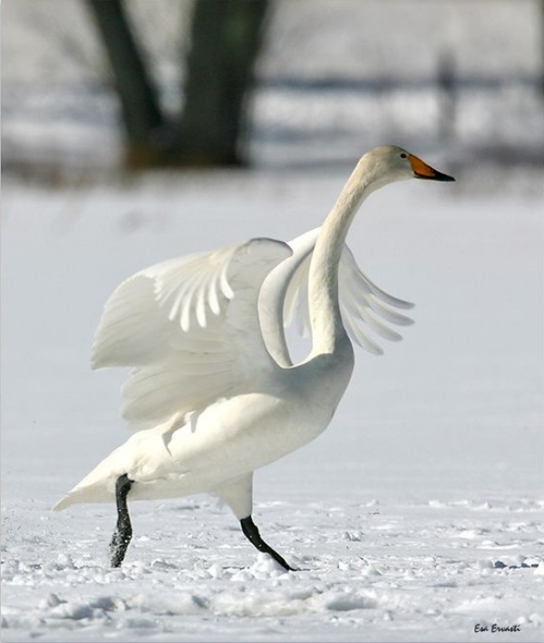 Highest Flying Birds Around the World