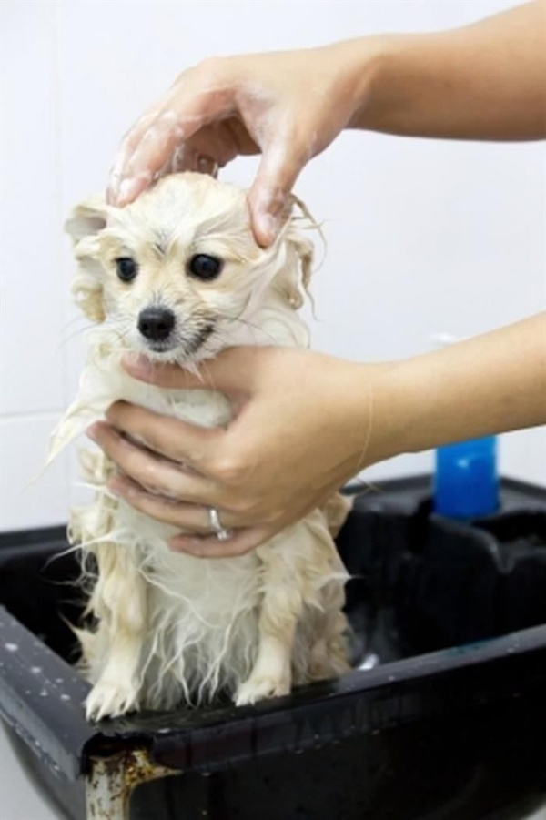 When and How to Bath your Puppy