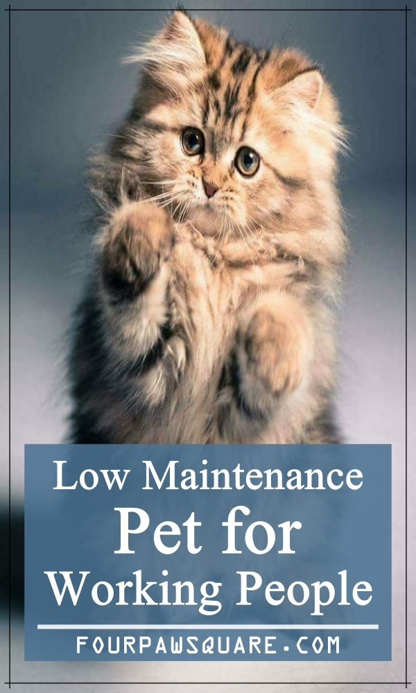 Low Maintenance Pet for Working People