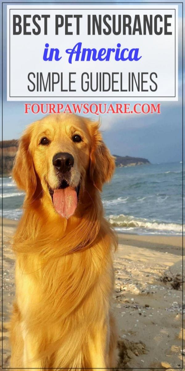 Best pet Insurance in America: Simple Guidelines