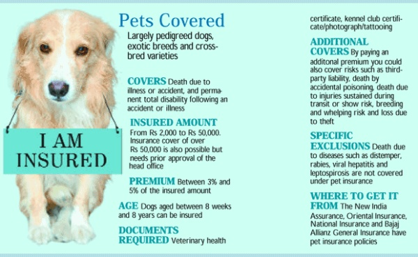 Best pet Insurance in America: Simple Guidelines