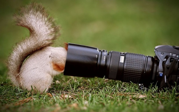 Funny Animals Peek A Boo Pictures