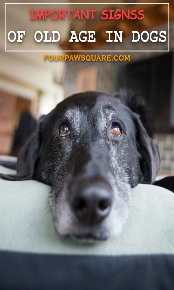 IMPORTANT SIGNS OF OLD AGE IN DOGS
