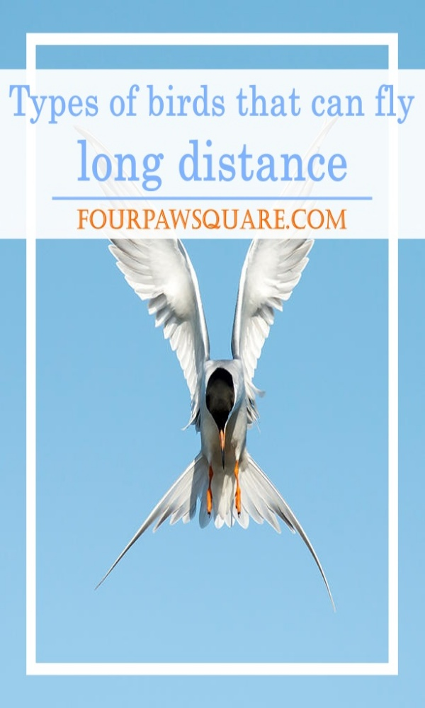 Types of birds that can fly long distance