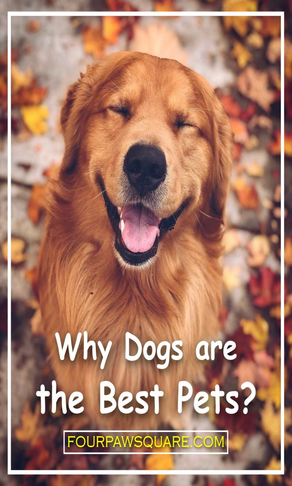Why Dogs are the Best Pets?