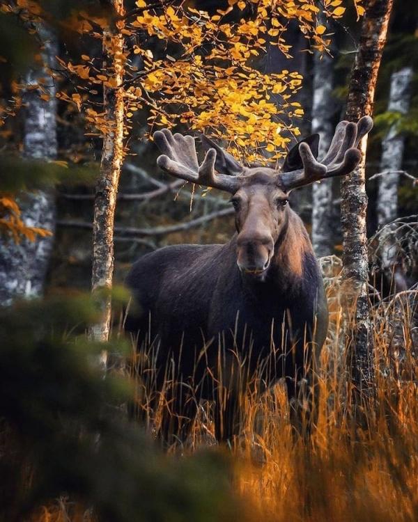 Fairy Forest Animals Photography Ideas