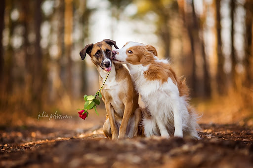 MUST-KNOW Dog Mating Facts For Every Dog Lover