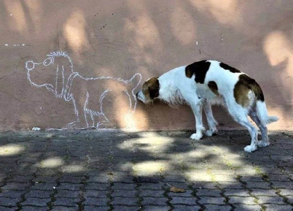 Funny Pictures of Animals in Action