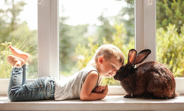 How to Deal with Kids and Rabbits under the Same Roof