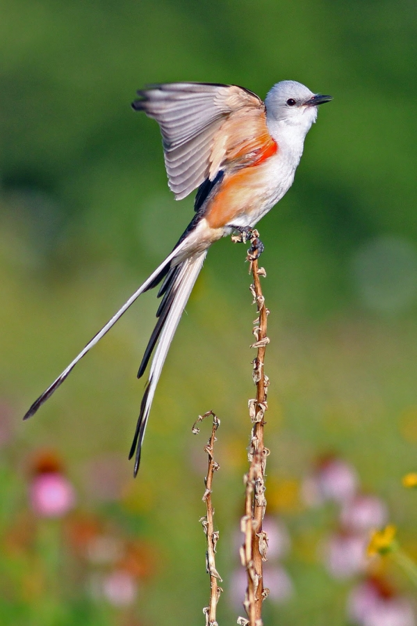 Top 10 Birds with Longest Feathers