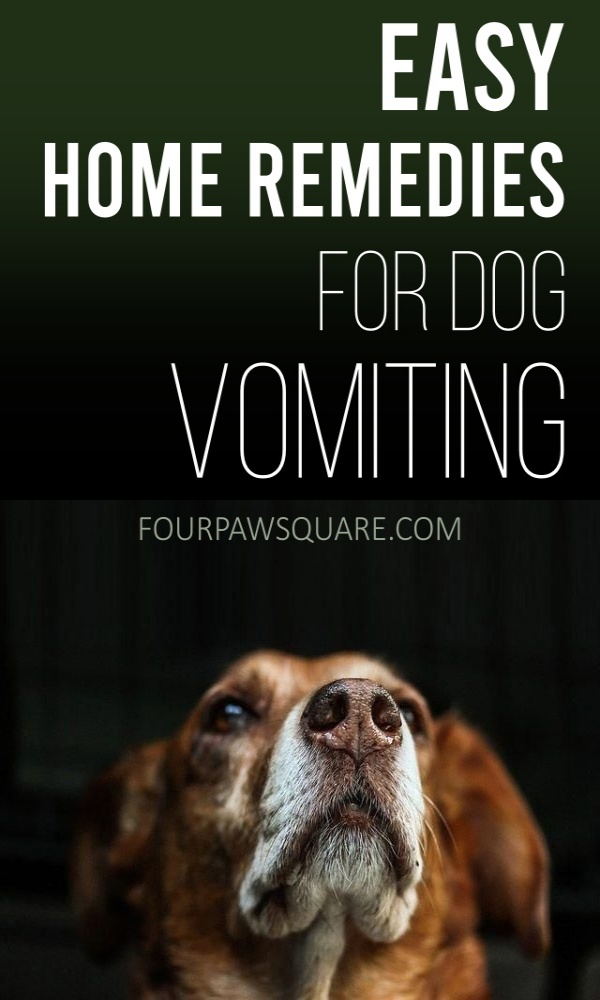 Easy Home Remedies for Dog Vomiting