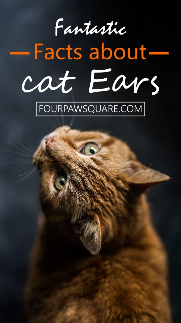 10 Fantastic Facts about cat Ears