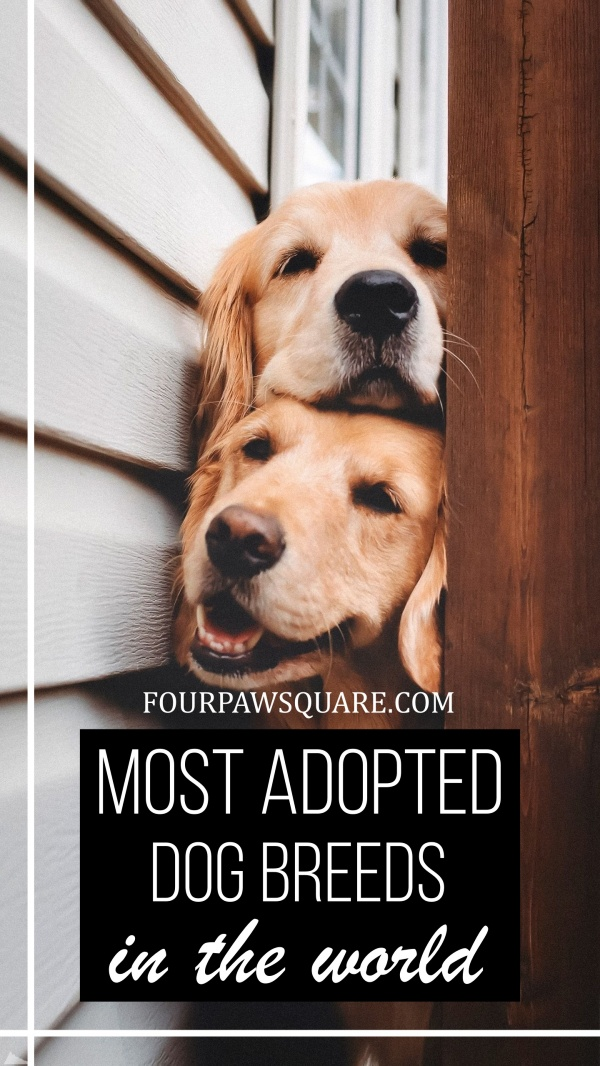Most adopted Dog Breeds in the world