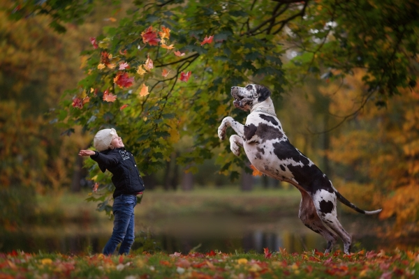 Amazing Pictures of Great Dane and their bond with the kids