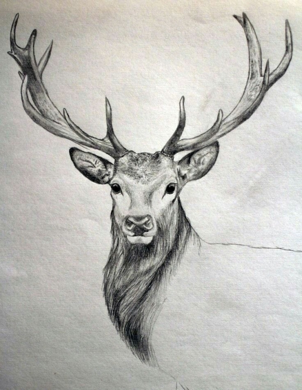 How to Draw your favorite Animal