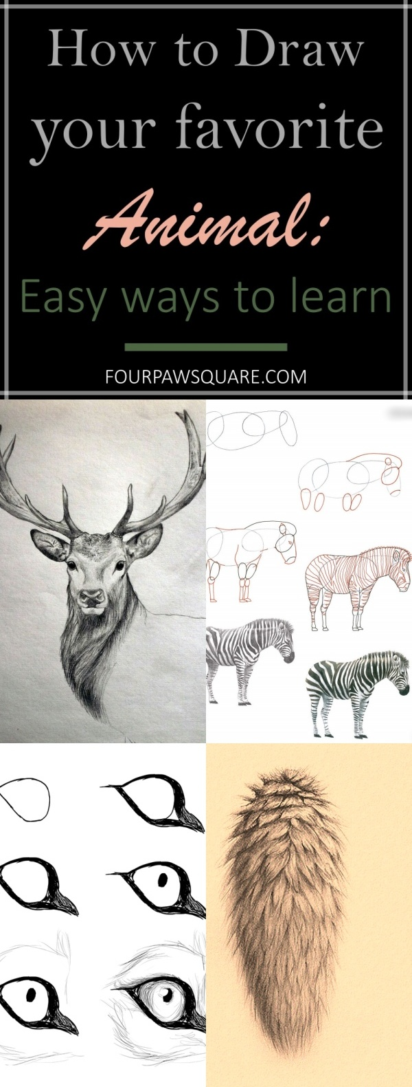 How to Draw your favorite Animal: Easy ways to learn