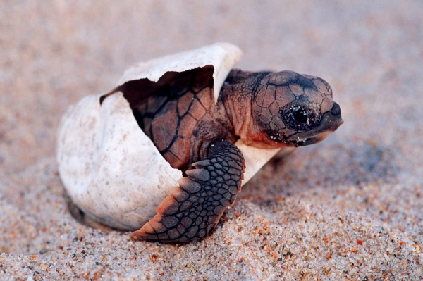 Amazing Pictures of Baby animals hatching eggs