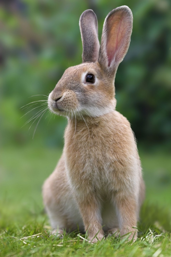 Cute Pictures of rabbit that make you smile- Funny Rabbit facts!