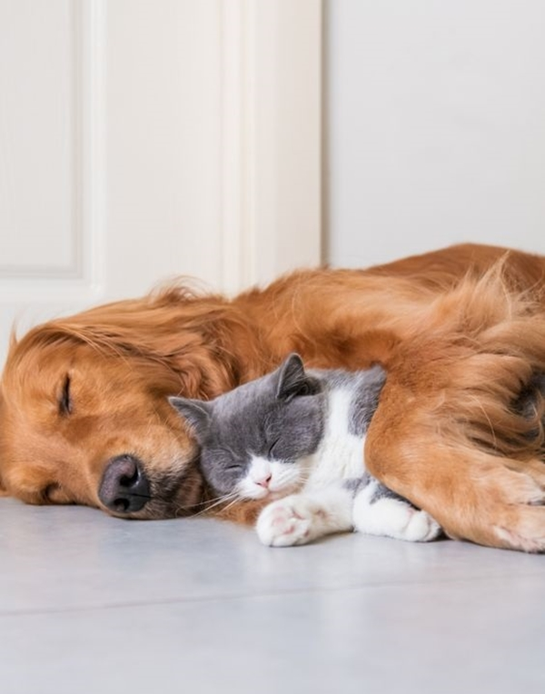 10 Most Profitable Pet Business Ideas To Start For Animals Lover