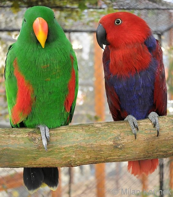12 Most Colorful Parrot Species in the world