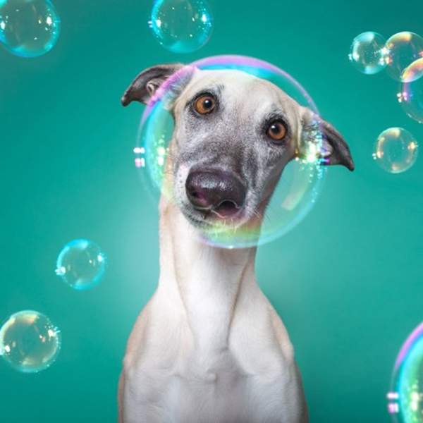 20 Epic Pet Photography Props And Pose
