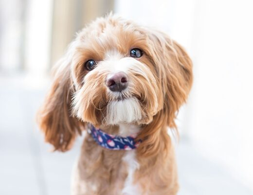 10 Most Annoying Dog Habits And How To Deal With Them