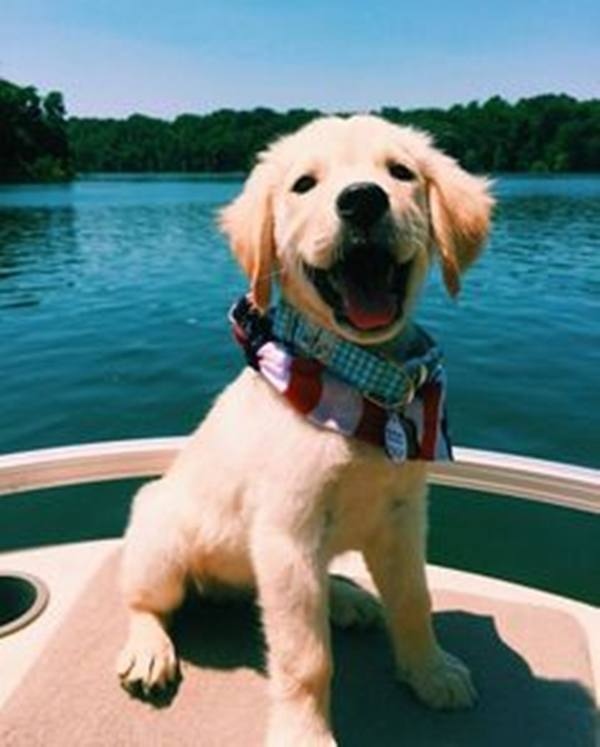 40 Cute Smiling Animals To Make Your Day