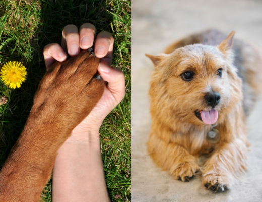 10 Tips on Taking Care Of Dog's Paws