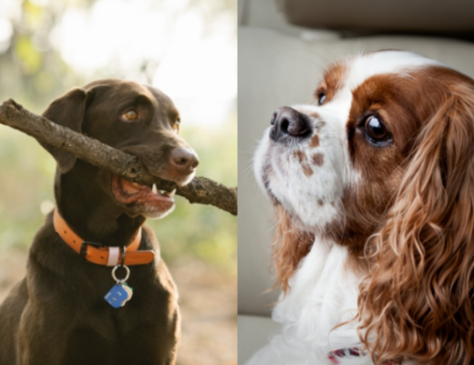 12 Tips to Stop Dogs from Destructive Chewing