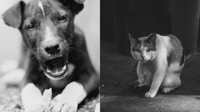 40 Fascinating Black And White Animal Photography