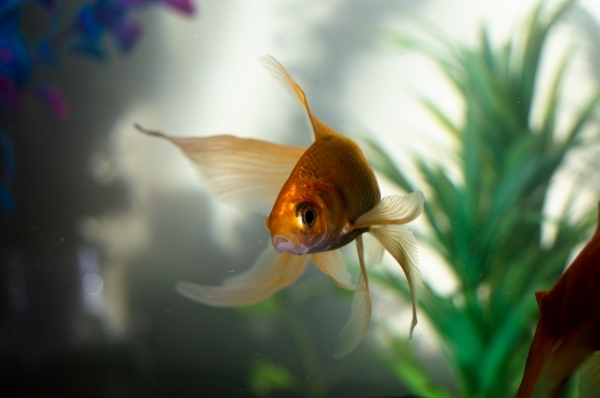 7 Unique Pets To Have Instead of Dogs and Cats