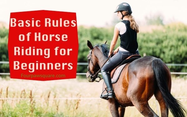 Basic Rules of Horse Riding for Beginners