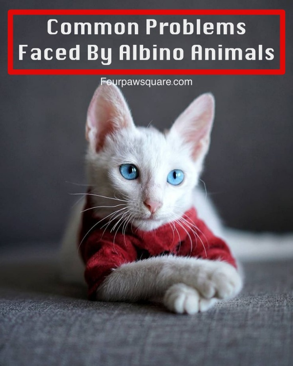 Common Problems Faced By Albino Animals