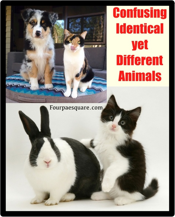 Confusing Identical yet Different Animals