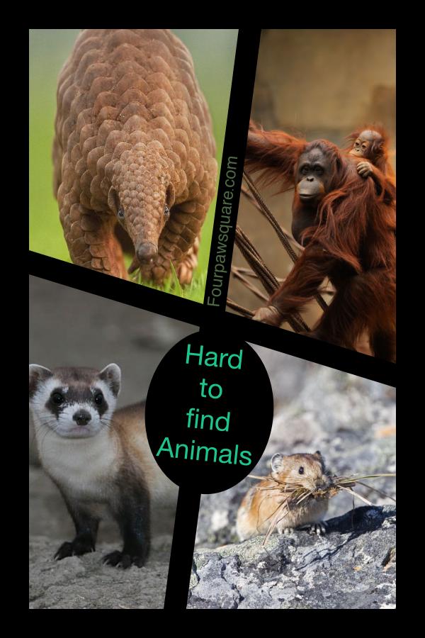 Hard to find Animals